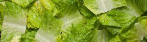 Diced Cos Lettuce